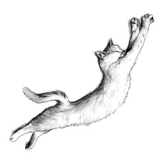 cat just woke up and stretched top view, sketch vector graphics monochrome illustration on white background