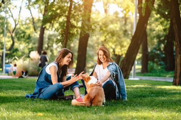 Fototapeta Two female friend in the park play with little dog obraz
