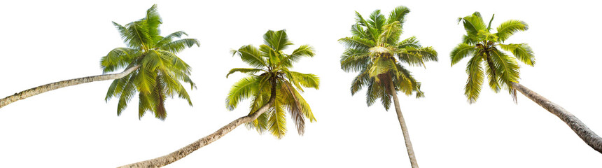 Foto op Canvas Palm boom Palm Trees Isolated