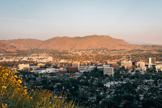 Yellow flowers and view of downtown Riverside, from Mount Rubidoux, Riverside, California