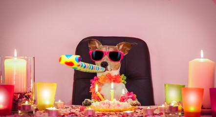 Foto op Aluminium Crazy dog happy birthday dog