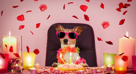 Foto op Aluminium Crazy dog valentines happy birthday dog