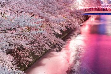 目黒川の夜の桜