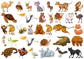 Set of wild animal Wall mural