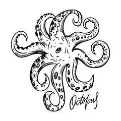 Octobus. Hand drawn vector illustration. Engraving style. Isolated on white background.
