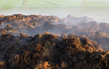 smoking heap of manure on a field