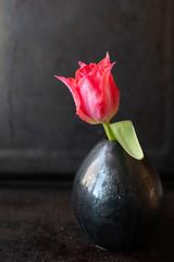 Closeup of a single red tulip in a dark vase