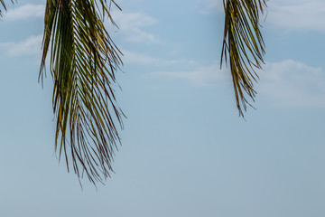 Palm leaves on the sky background