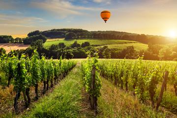 Beautiful vineyard at sunset. Travel around France, Bordeaux Fototapete