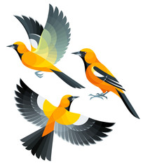 Stylized Birds - Orange Oriole