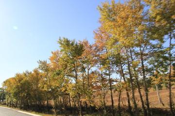 Tuinposter Canada autumn in the park