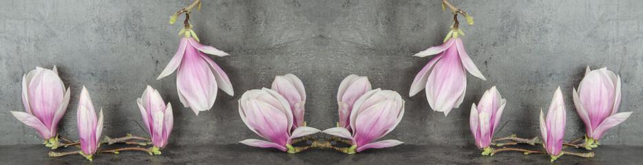 Wunderschöne Magnolien isoliert anthrazit Hintergrund Wall mural
