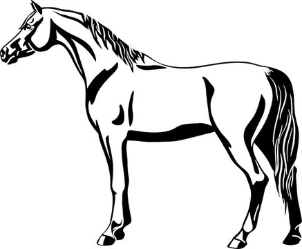 Logo of a horse standing still, side view