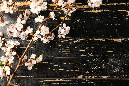Beautiful blossoming branches on dark wooden background