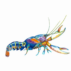Colorful realistic lobster.