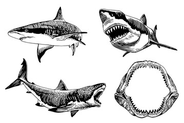 Graphical set of sharks isolated on white background,vector illustration for tattoo,coloring and printing