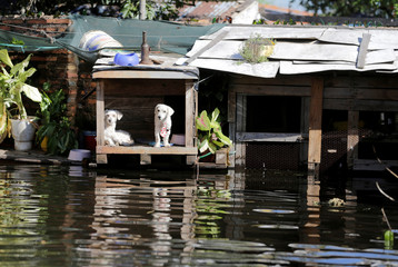 Puppies are seen in their kennel in a flooded neighbourhood after the Paraguay river overflowed, on the outskirts of Asuncion
