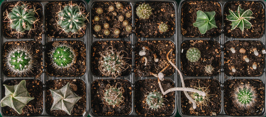 Collection of cacti shot from above.