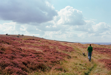 Walker and his dog on footpath through heather. Longstone Moor,