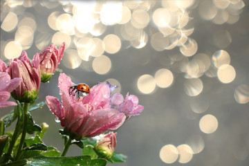 Spring blurred background with first flowers and ladybug, abstract first flowers on bokeh background at sunset.