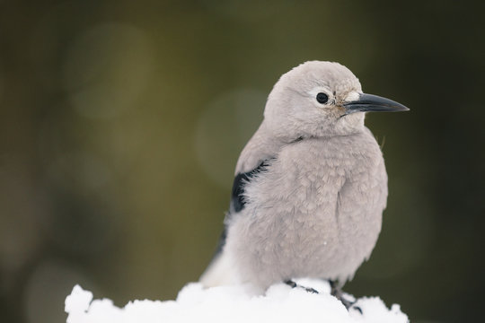 A bird resting at Canada's Banff National Park