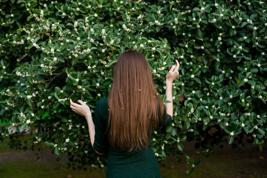 Back of  young woman in spring blossom