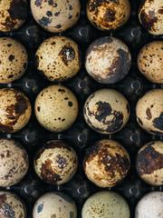 Quail eggs in a holder