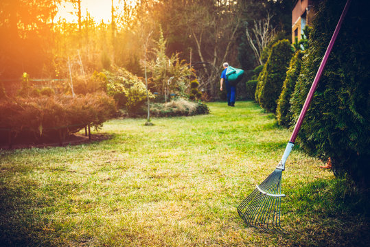 Raking grass in the garden. The man fertilizes the soil in the garden, preparing for work on the garden. Preparation for the gardening season. The gardener holds a rake in his hand.