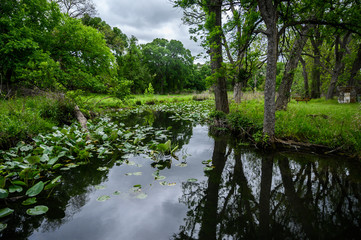 Marshy Swamp in forest with lilly pad