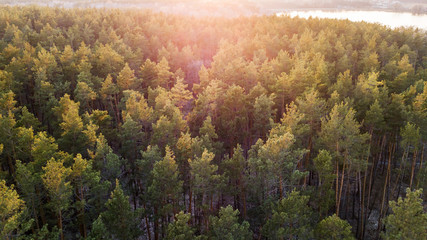 aerial veiw of green forest on sunset. drone shot .