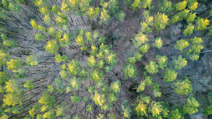 aerial veiw of green forest. drone shot .