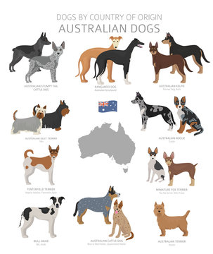 Dogs by country of origin. Australian dog breeds. Shepherds, hunting, herding, toy, working and service dogs  set