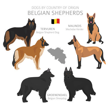 Dogs by country of origin. Belgian dog breeds. Shepherds, hunting, herding, toy, working and service dogs  set