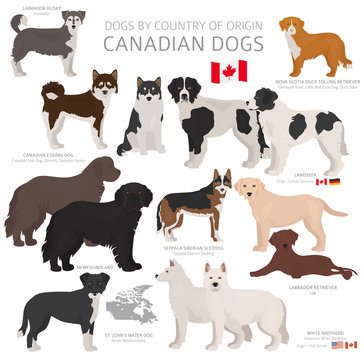 Dogs by country of origin. Canadian dog breeds. Shepherds, hunting, herding, toy, working and service dogs  set