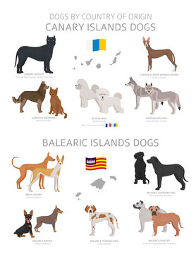Dogs by country of origin. Canary and Balearic islands dog breeds. Shepherds, hunting, herding, toy, working and service dogs  set
