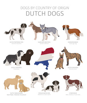 Dogs by country of origin. Dutch dog breeds. Shepherds, hunting, herding, toy, working and service dogs  set