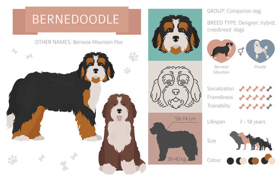 Designer, crossbreed, hybrid mix dogs collection isolated on white. Flat style clipart set