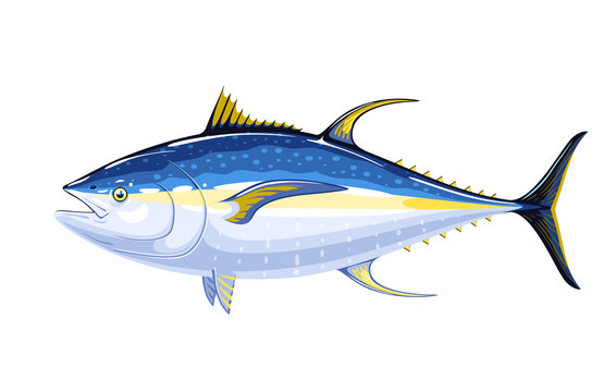 Commercial fish species. Yellowfin tuna. Vector illustration cartoon flat icon isolated on white.