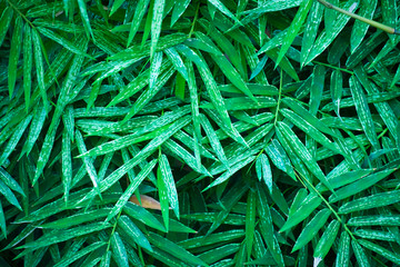 Poster de jardin Bambou Pattern of green bamboo leaves