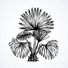 Tropical bush. Vector drawing