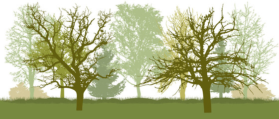 Bare trees, early spring park. Vector illustration.
