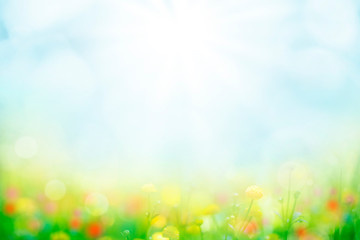 abstract background with green grass and flowers over sunny blue sky
