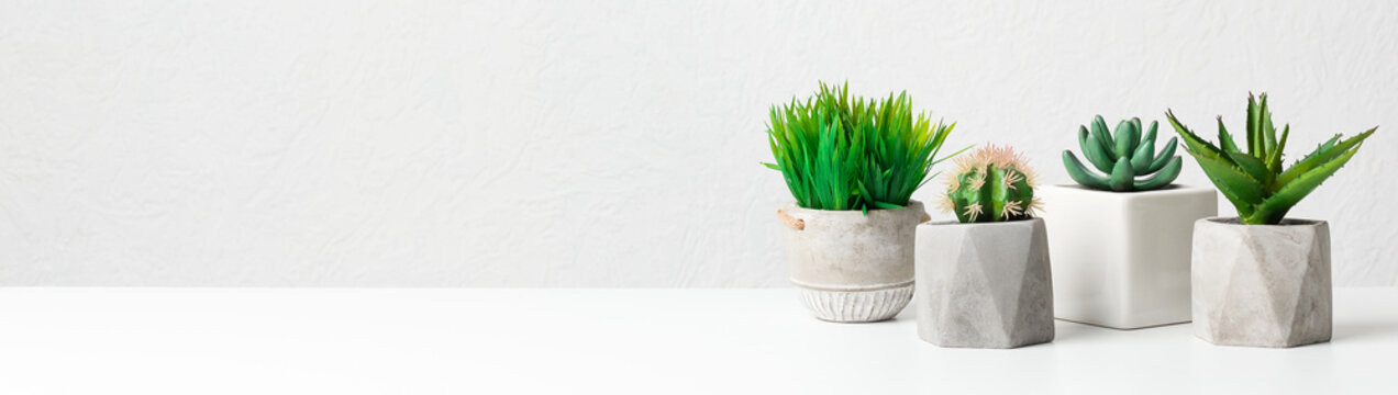 Potted succulent and grassy plants over grey wall