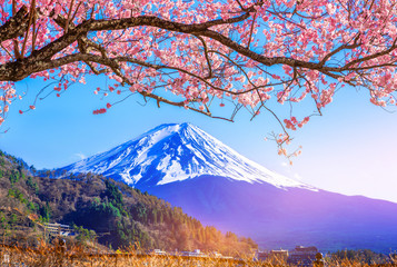 Mount Fuji and cherry blossoms which are viewed from lake Kawaguchiko, Yamanashi, Japan..