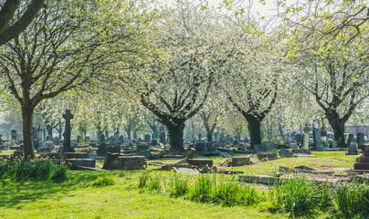 stary cmentarz wiosną