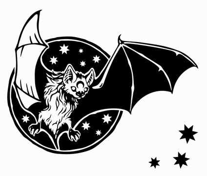 bat flies against the sky and stars