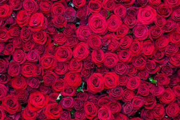 Beautiful background from a variety of red roses. Nature