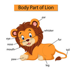 Diagram showing body part of lion