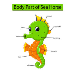 Diagram showing body part of sea horse