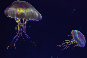 painting of jelly fish